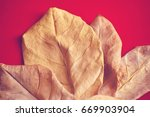 dry leaves on red background | Shutterstock . vector #669903904
