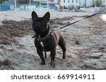 cute french bulldog | Shutterstock . vector #669914911