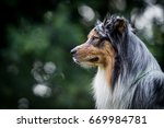 two australian shepherds head... | Shutterstock . vector #669984781