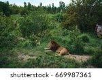 lion  wildlife                  ... | Shutterstock . vector #669987361