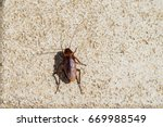 american cockroach sitting on a ... | Shutterstock . vector #669988549