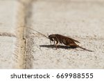 american cockroach sitting on a ... | Shutterstock . vector #669988555
