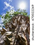 Small photo of look up perspective at the trunk of a ceiba tree loaded with thorns reaching all the way to the top branches