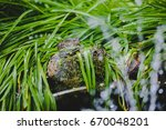 Frogs And Toads Hiding In The...