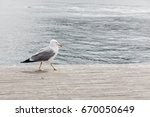 seagull on old withered stained ... | Shutterstock . vector #670050649