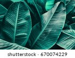 tropical leaf texture  large... | Shutterstock . vector #670074229