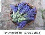 lavender vintage. lavender... | Shutterstock . vector #670121515