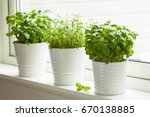 Small photo of fresh basil and thyme herb in pot