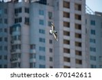 Small photo of Flying larus in city