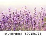 lavender field | Shutterstock . vector #670156795