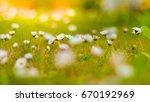 beautiful summer daisy flowers... | Shutterstock . vector #670192969