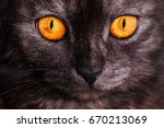 Portrait Of A Dark Cat With...