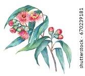 a branch of eucalyptus caesia ... | Shutterstock . vector #670239181