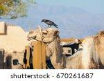 egypt  the red sea. dahab ...   Shutterstock . vector #670261687