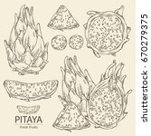 collection of pitaya fruit ... | Shutterstock .eps vector #670279375
