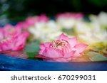 Soft Focus Of Beautiful Lotus...