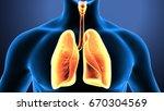 3d illustration of human body... | Shutterstock . vector #670304569