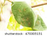 ant and anthill in nature | Shutterstock . vector #670305151