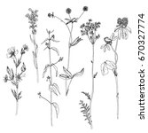 vector set of ink drawing wild... | Shutterstock .eps vector #670327774