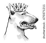 royal pit bull  | Shutterstock . vector #670371211