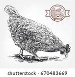 sketch of chicken drawn by hand....   Shutterstock .eps vector #670483669