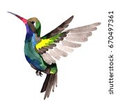 sky bird colibri in a wildlife... | Shutterstock . vector #670497361