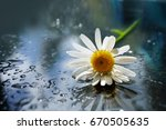 a daisy flower close up on a... | Shutterstock . vector #670505635