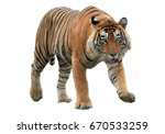 male of bengal tiger  panthera... | Shutterstock . vector #670533259