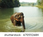 the asian elephant in laos ... | Shutterstock . vector #670552684