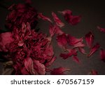 funeral flowers. two withered... | Shutterstock . vector #670567159
