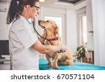 Stock photo young female veterinarian checking up the dog at the veterinarian clinic 670571104