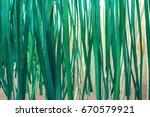 bamboo streak close up
