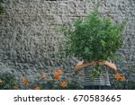 girl with a bouquet of lemon... | Shutterstock . vector #670583665