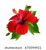 red hibiscus flowers. isolated... | Shutterstock . vector #670594921