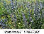 blue weed meadow | Shutterstock . vector #670623565