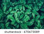 green leaves background design... | Shutterstock . vector #670673089