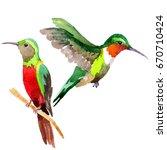 sky bird colibri in a wildlife... | Shutterstock . vector #670710424