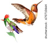 sky bird colibri in a wildlife... | Shutterstock . vector #670710664