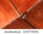 bat on the wooden ceiling in... | Shutterstock . vector #670775491