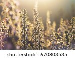 beautiful summer background... | Shutterstock . vector #670803535