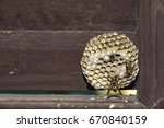 Wasps' Nest In The Old Windows