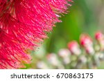 close up of a red flower with... | Shutterstock . vector #670863175