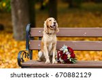big and trained cocker spaniel... | Shutterstock . vector #670882129
