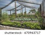 net shade greenhouse  | Shutterstock . vector #670963717