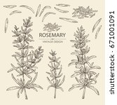collection of rosemary. vector... | Shutterstock .eps vector #671001091