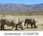 rhinos in south africa | Shutterstock . vector #671039755