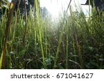 Thatch Or Long Grass