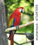 scarlet macaw | Shutterstock . vector #671097055