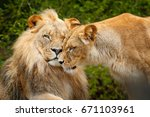 portrait of pair of african... | Shutterstock . vector #671103961