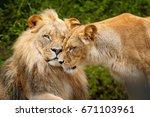 portrait of pair of african... | Shutterstock . vector #671103961